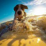 Jak zaplanować wakacje z psem?